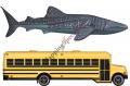 Whale-Shark_School-Bus